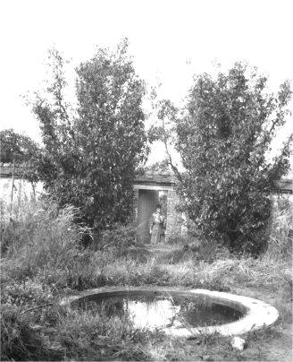 1919_NLaF_Pool