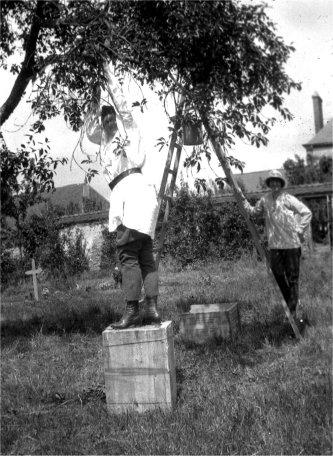 1919_NLaF_Trees